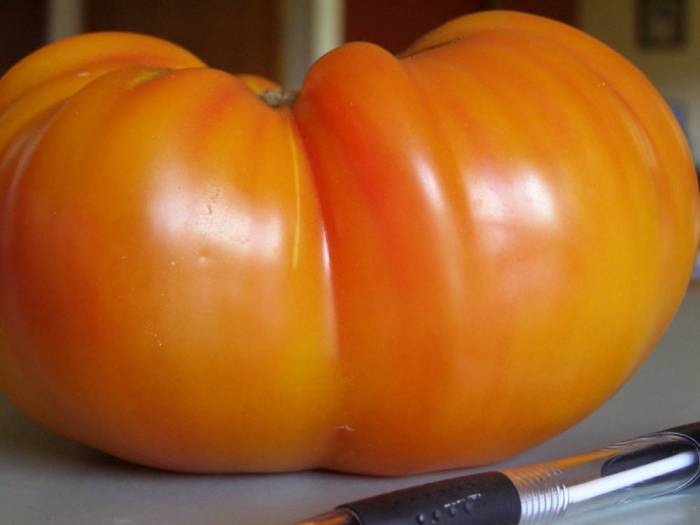 Sweet Virginia Tomato, heirloom tomato