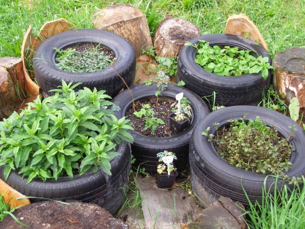 tire garden with peppermint, lemon balm, bergamont, raspberry and soapwort.
