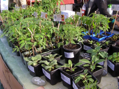 Stoney Ground Herbs at Pram Beach markets