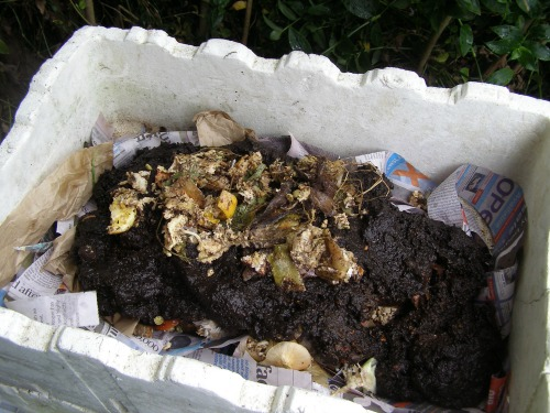 How to make a worm farm out of polystyrene boxes