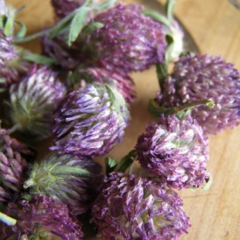 Dried Red Clover