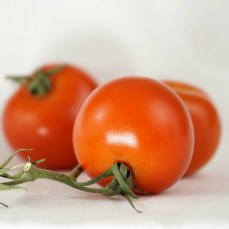 Early Baxter's Bush Tomato, organic heirloom tomatos for sale, nz
