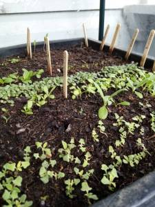 Seed sowing 101