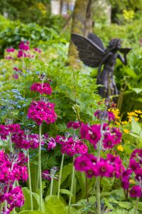 Stonyford Cottage Gardens - Candelabra Primulas and Fairy