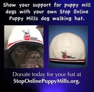 Donate Hat