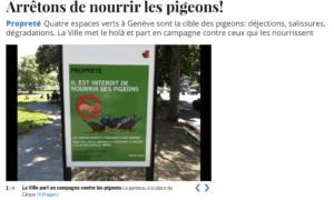 Genève: Arretons de nourrir les pigeons!