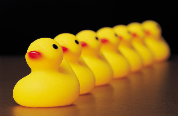 MS yellow ducks in row