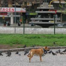 dog chasing animals