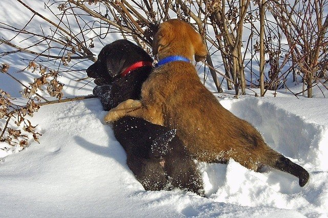 How To Stop Your Dog From Biting (Or Nipping!) 1