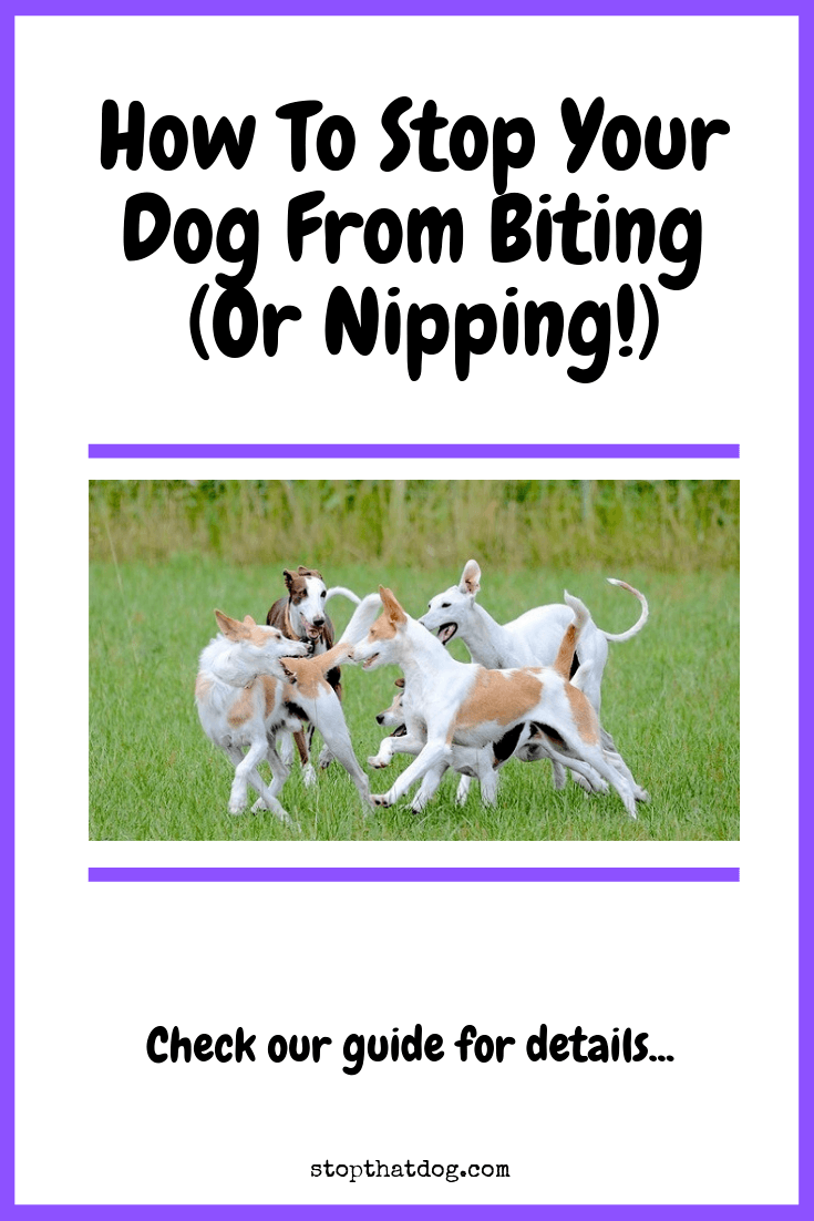 Want to understand why your dog keeps biting or nipping? If so, our guide reveals some of the key reasons why, and explains what you can do about it.