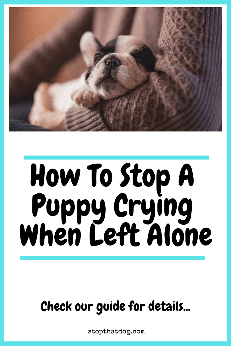 How To Stop A Puppy Crying When Left Alone Stop That Dog