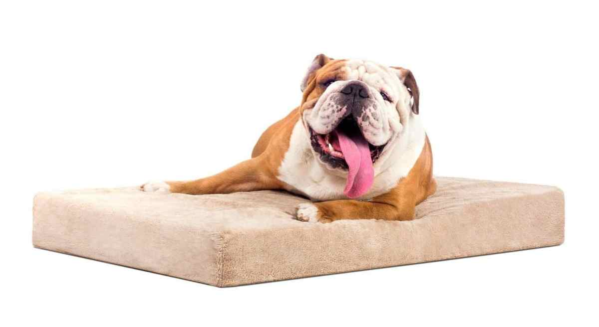 the best orthopedic dog beds – perfect for any dog! | stop that dog!