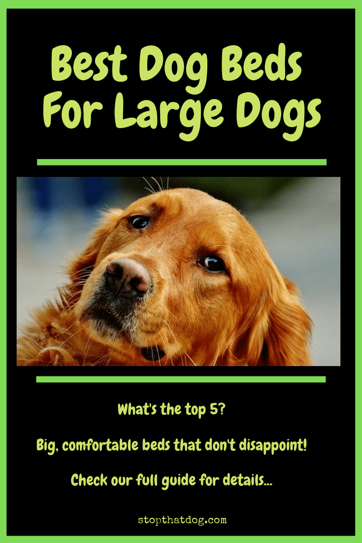 Looking for the best dog beds for large dogs? If so, our guide reveals many of the best options and highlights the top 5 on the market.