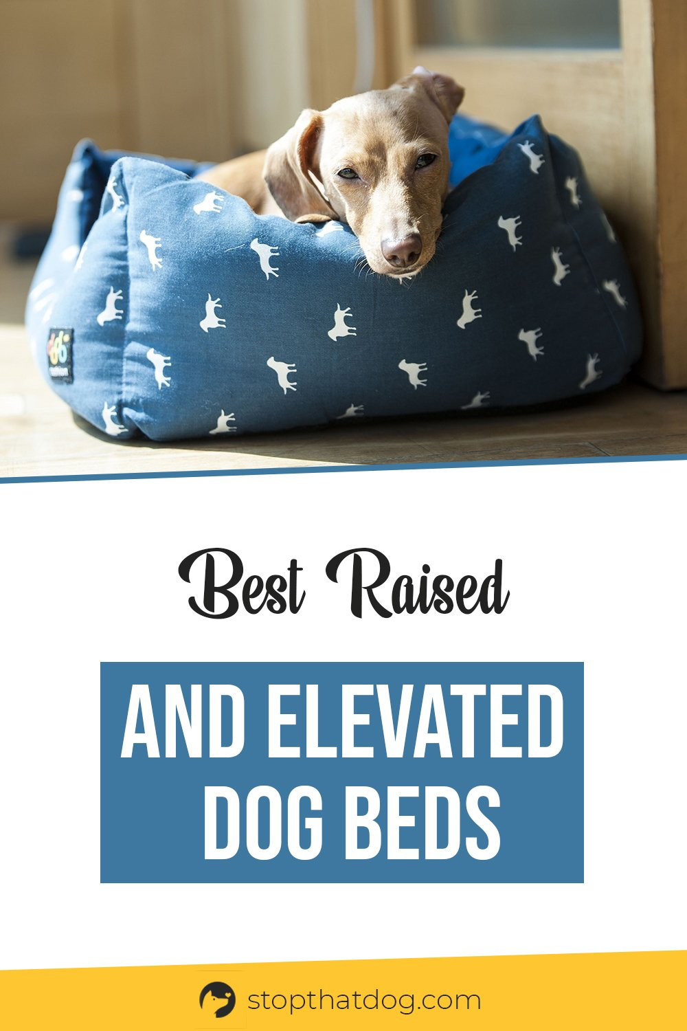 Looking for the best raised and elevated dog beds? If so, our guide reveals the best ones. These beds won\'t let you down, come take a look.