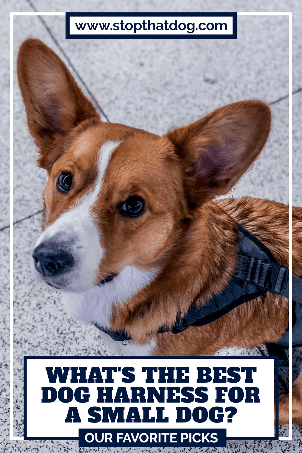 Need the best harness for a small dog? If so, this guide reveals the best options. Don\'t make a mistake. These won\'t let you down. Come take a look.