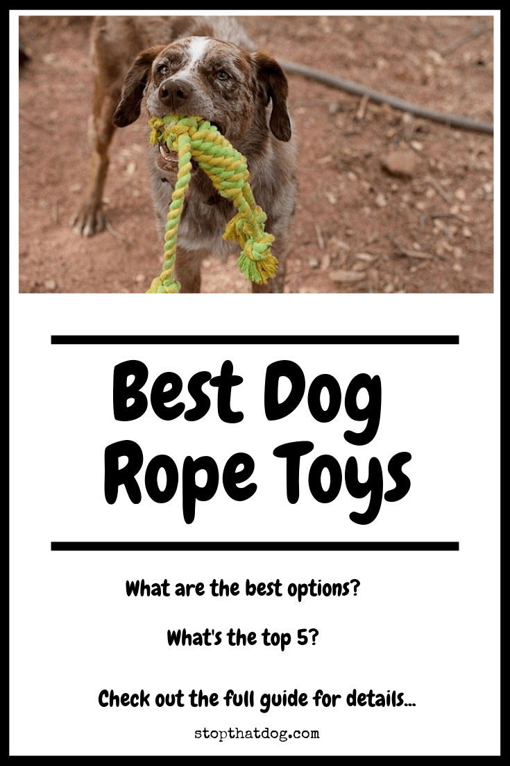 Looking for the best dog rope toys? If so, our guide reveals many of the top options on the market. Treat your dog to the best!