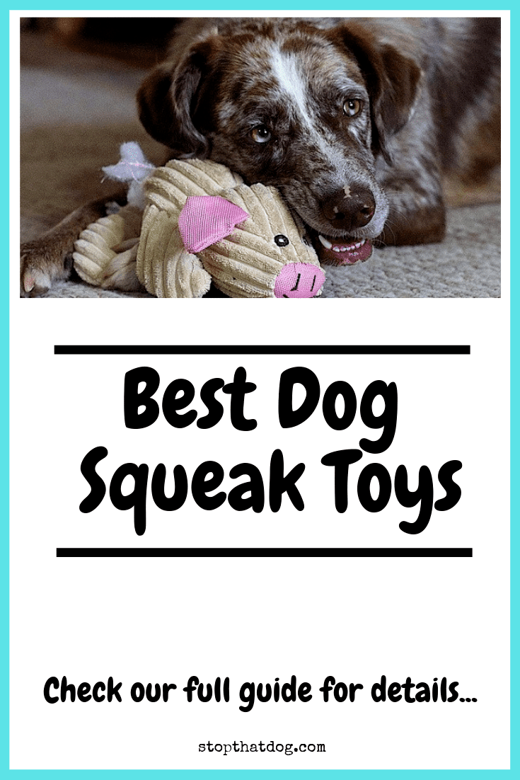 Looking for the best squeaky dog toys? If so, our guide highlights many of the top options based on reviews from dog owners.