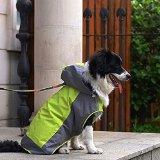 What's The Best Coat For Large Dogs? Our Favorite Picks 3