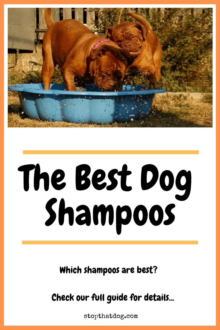 Looking to buy the best dog shampoos for your dog? If so, our guide highlights the top options on the market, based on dog owner reviews.