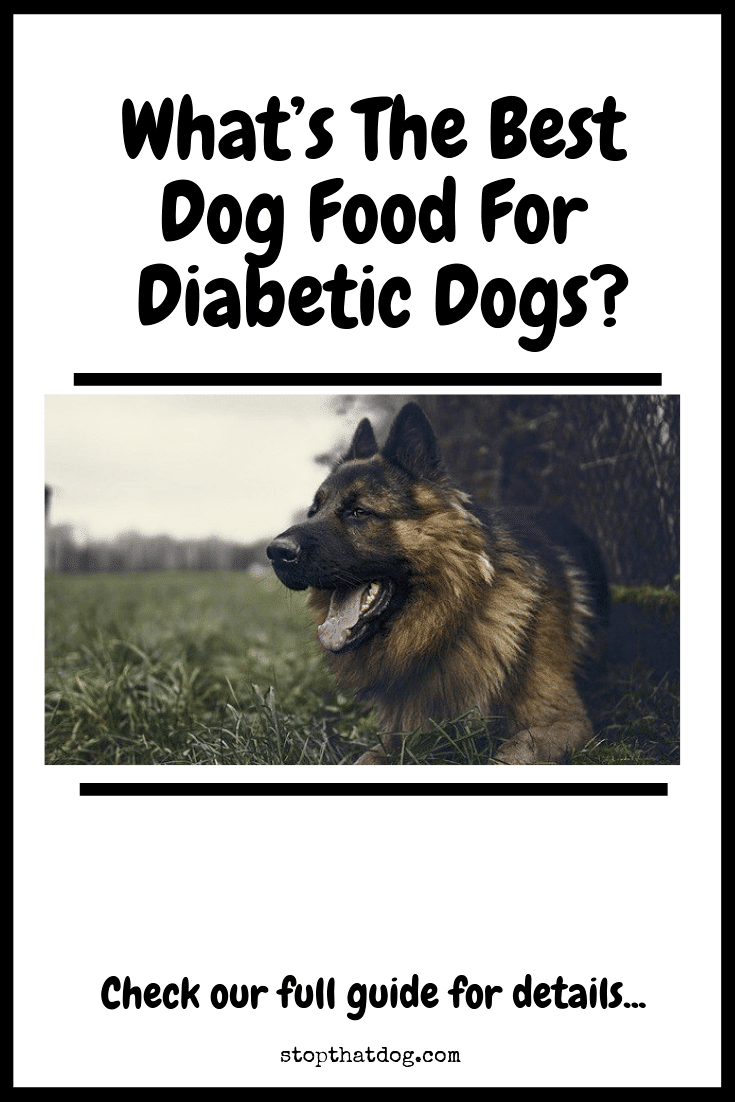 What S The Best Dog Food For Diabetic Dogs Stop That Dog
