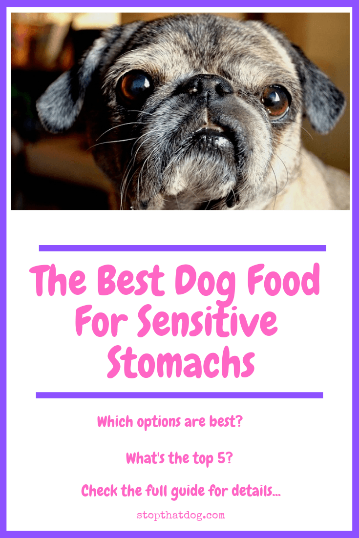 Looking to find the best dog food for sensitive stomachs? If so, our guide reveals many of the best options and highlights the top 5 based on buyer reviews.