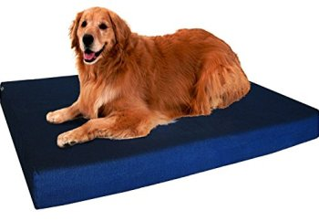 What's The Best Dog Bed For Large Dogs? Our Ultimate Guide 3