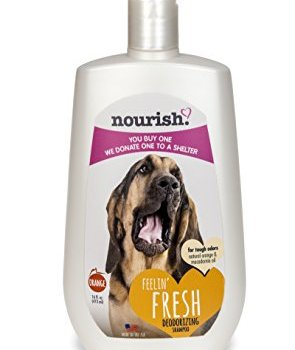 What's The Best Dog Shampoo For Odor? 6