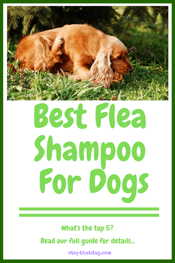 Looking to buy the best flea shampoo for dogs? If so, our guide reveals many of the best options on the market. Includes gentle solutions to suit any dog.