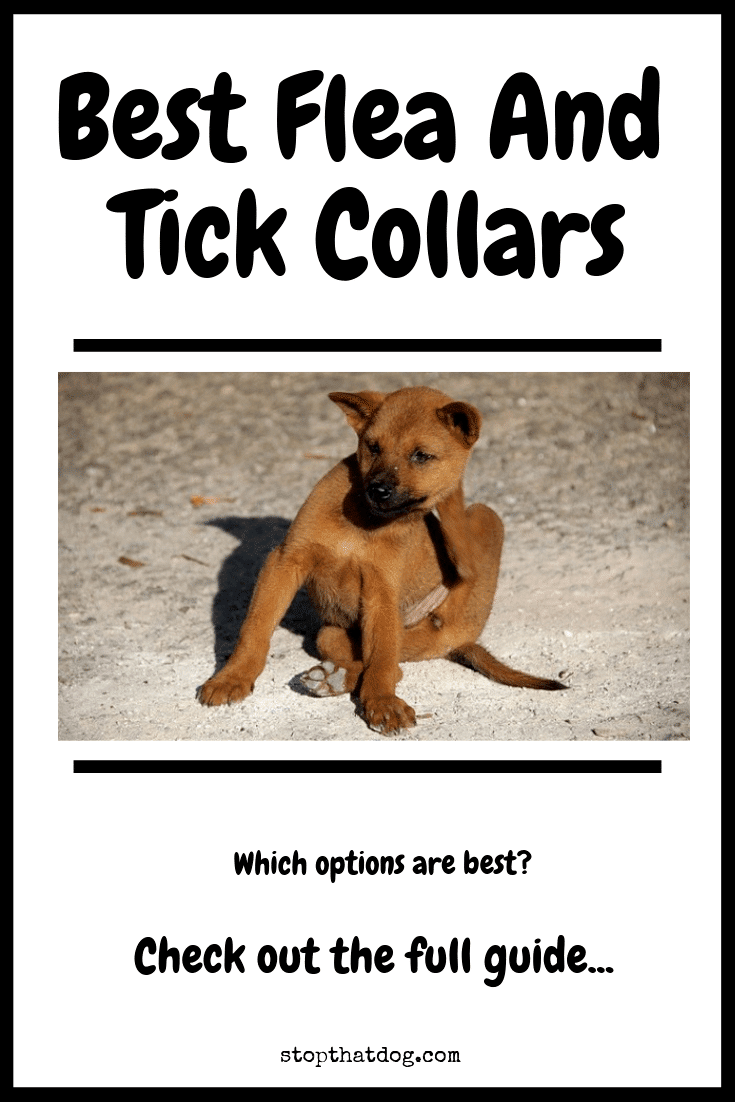 Searching for the best flea and tick collars? If so, our guide reveals the top solutions on the market based on buyer reviews and user feedback.