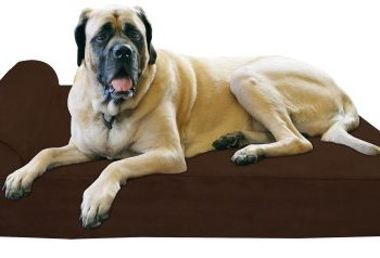 What's The Best Orthopedic Memory Foam Dog Bed? Our Complete Guide 3