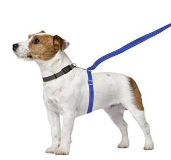 What Are The Best Leashes And Harnesses For Dogs That Pull? 5