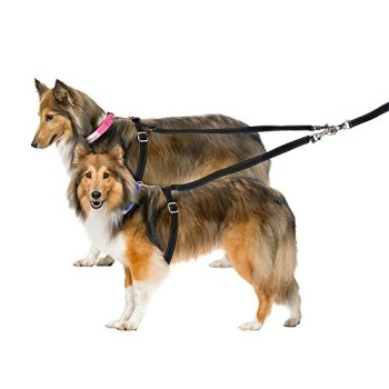 What Are The Best Leashes And Harnesses For Dogs That Pull? 6