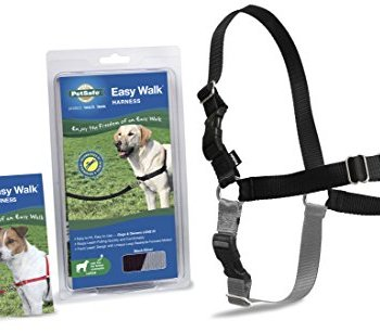 What Are The Best Leashes And Harnesses For Dogs That Pull? 9