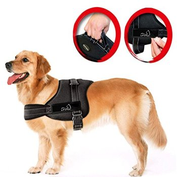 What Are The Best Leashes And Harnesses For Dogs That Pull? 21