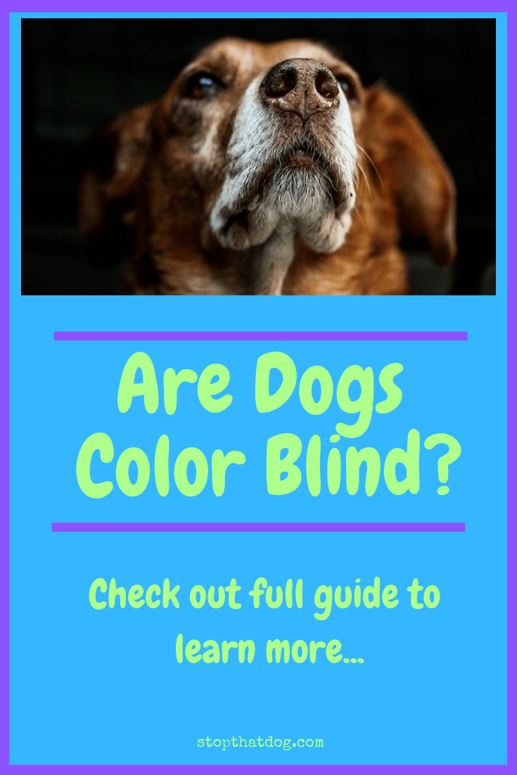 Curious to learn whether dogs are color blind or whether it\'s a myth? If so, this guide reveals a few interesting facts about how a dog\'s vision works.