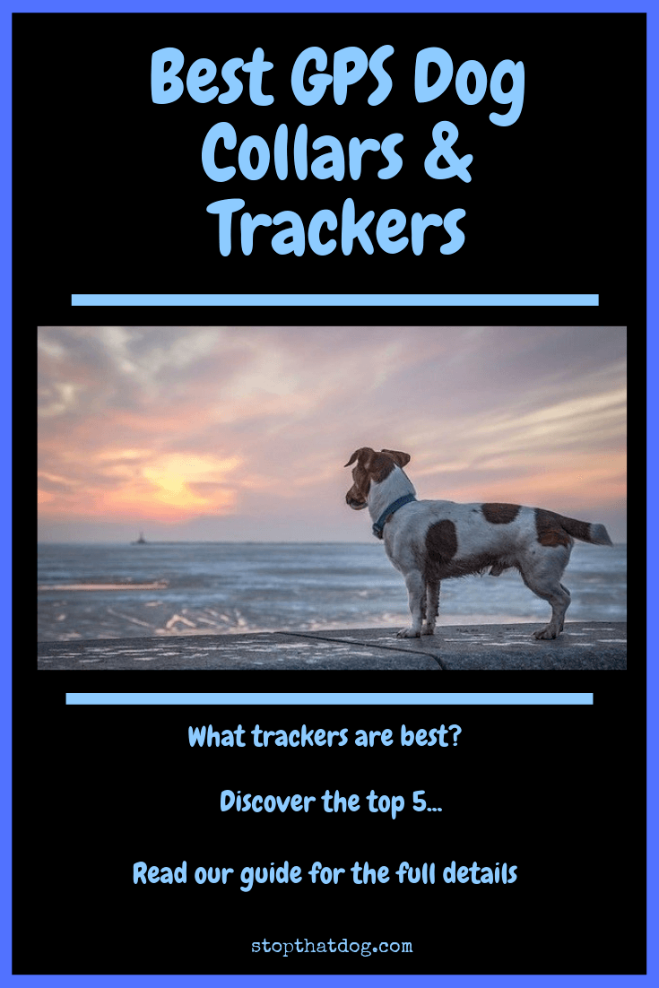 Look for the best GPS dog collars and trackers? If so, our guide reveals the top 5 solutions that score great feedback and won\'t let you down.
