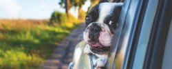 How To Keep Your Dog Safe And Secure In The Car 20
