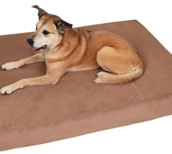 Are Big Barker Dog Beds Any Good? Here's Our Thoughts 5