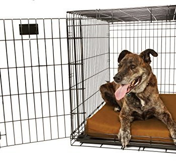Are Big Barker Dog Beds Any Good? Here's Our Thoughts 11