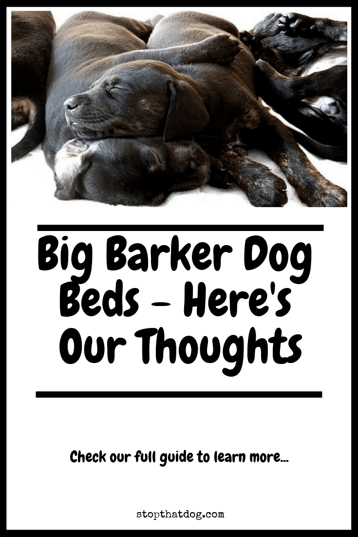 Curious about Big Barker dog beds? If so, our guide reveals the key facts you\'ll need to know and highlights genuine buyer feedback from dog owners.