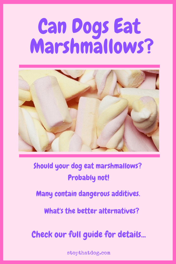 Marshmallows can be risky for dogs. Our guide explains why you should be very careful and suggests some better alternatives!
