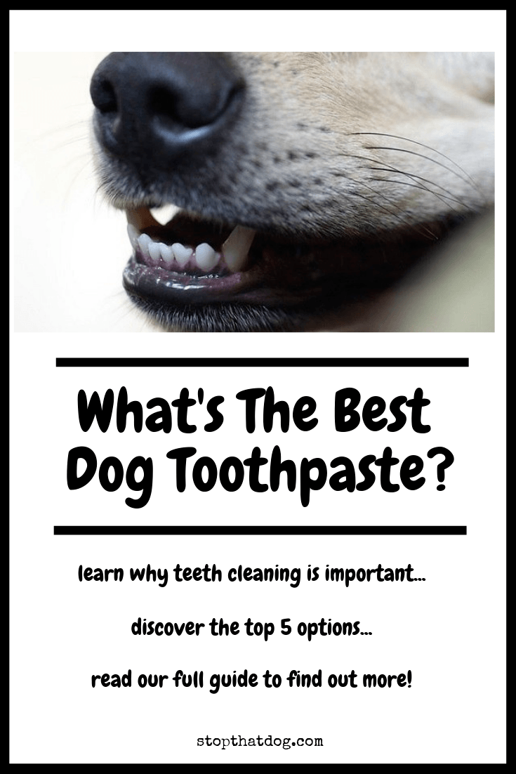 Are you looking for the best dog toothpaste? Our guide reveals the top 5 options currently on the market. Also learn why toothbrushing is key for your dog!