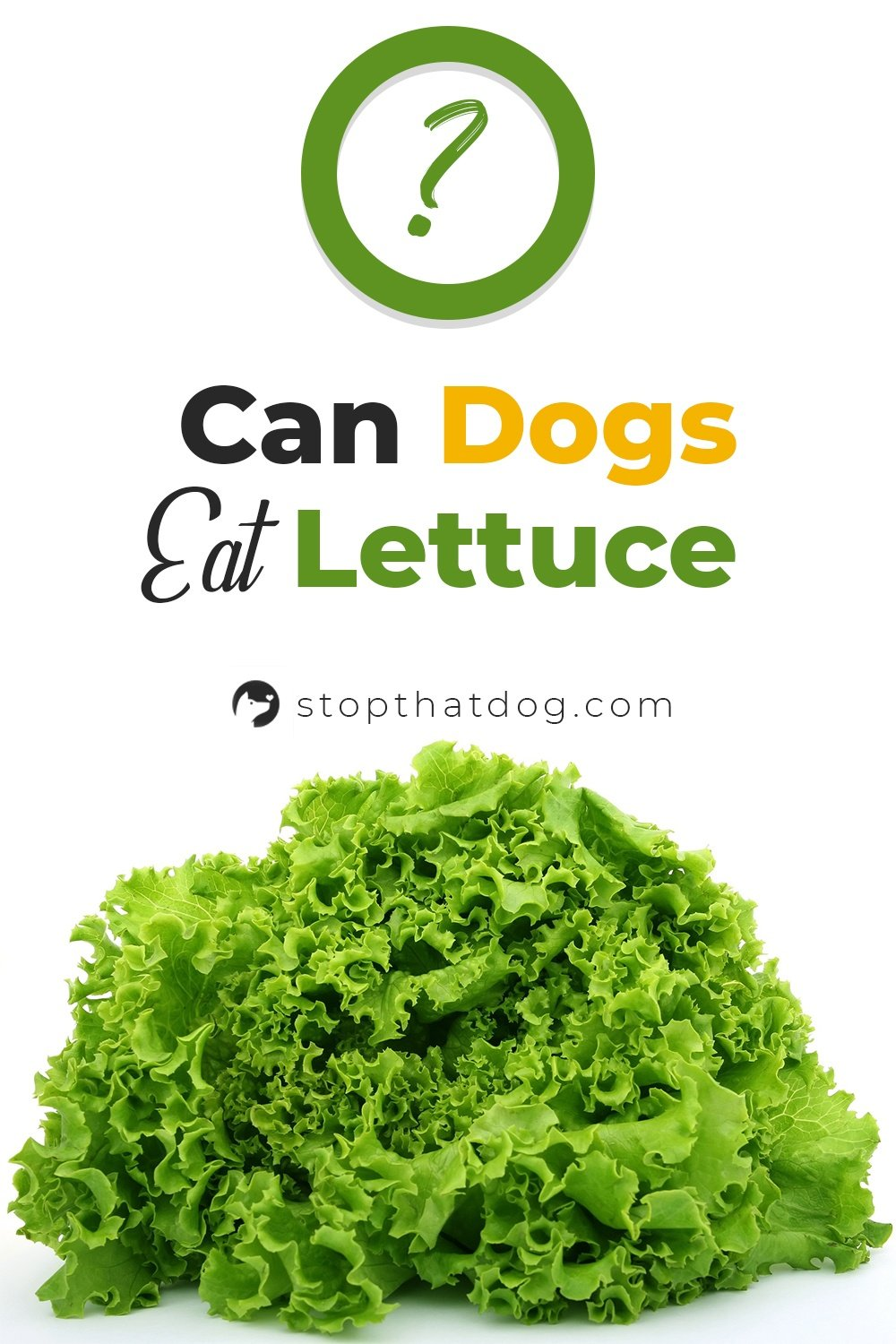 Wondering if dogs can eat lettuce? If so, this guide reveals the answers you\'re looking for.