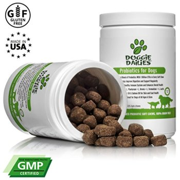 What Are The Best Probiotics For Dogs? Your Essential Guide 7
