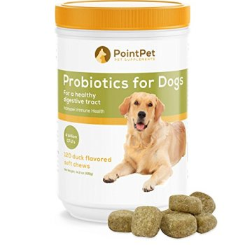 What Are The Best Probiotics For Dogs? Your Essential Guide 31