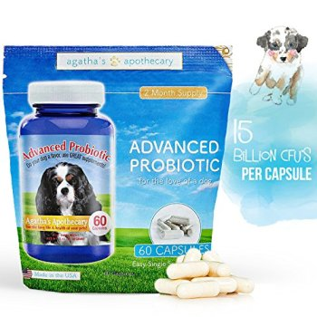 What Are The Best Probiotics For Dogs? Your Essential Guide 25