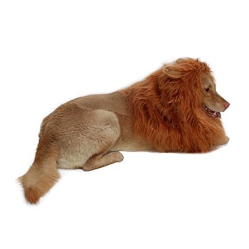 Where Can I Find A Lion Mane Dog Costume? Here's The Best 20