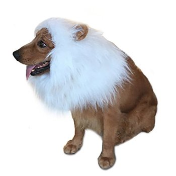 Where Can I Find A Lion Mane Dog Costume? Here's The Best 9