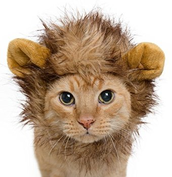 Where Can I Find A Lion Mane Dog Costume? Here's The Best 13