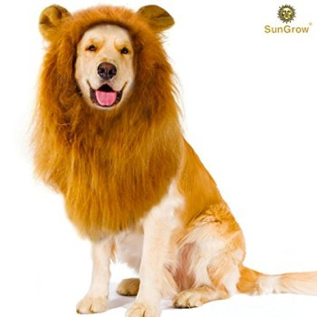 Where Can I Find A Lion Mane Dog Costume? Here's The Best 12